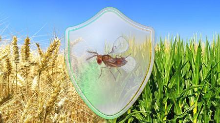 Ідеальний захист врожаю